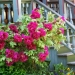 flowersandporch