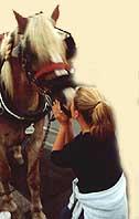 HorseKissWb