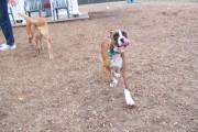 Cape May dog park