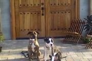 Dogs enjoying Hawk Haven Winery. Photo courtesy of Jeffrey Garrity