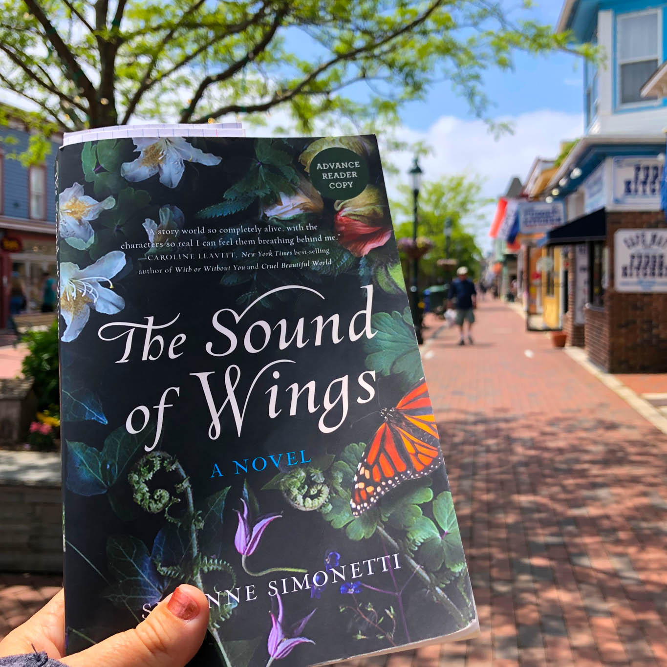 On The Washington Street Mall with The Sound Of Wings
