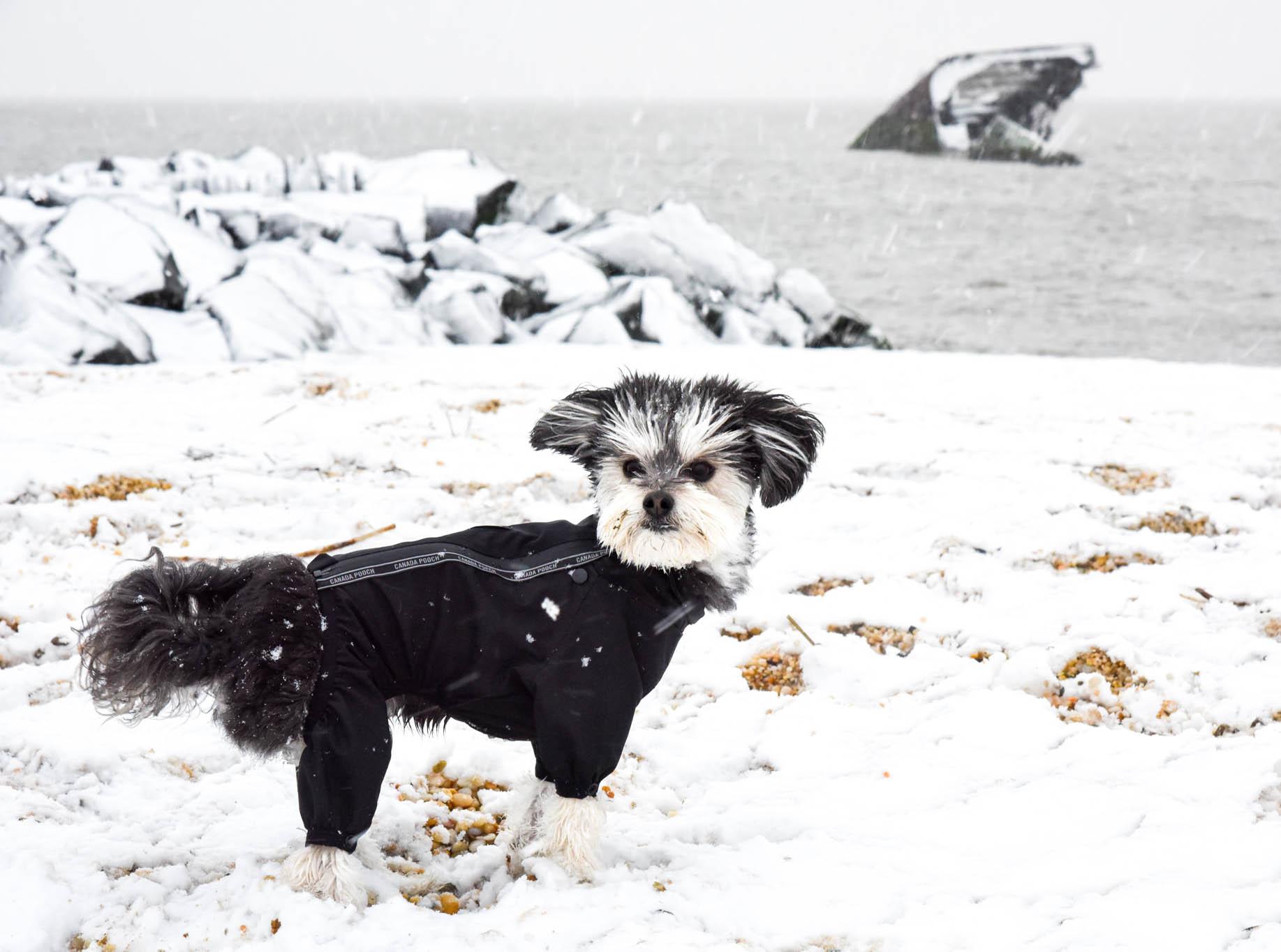 Buddy on Sunset Beach.