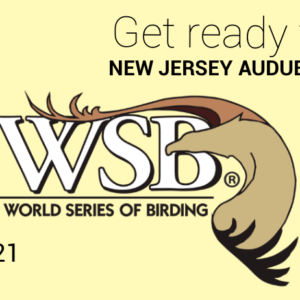 World Series of Birding