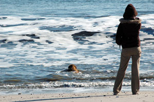 Winter is the best time to bring your dog to Cape May's beaches