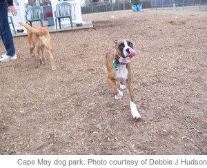 Cape May dog park, Cape May doggie park