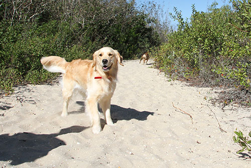 Dog friendly things to do in Cape May