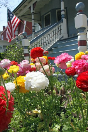 Colors of Cape May