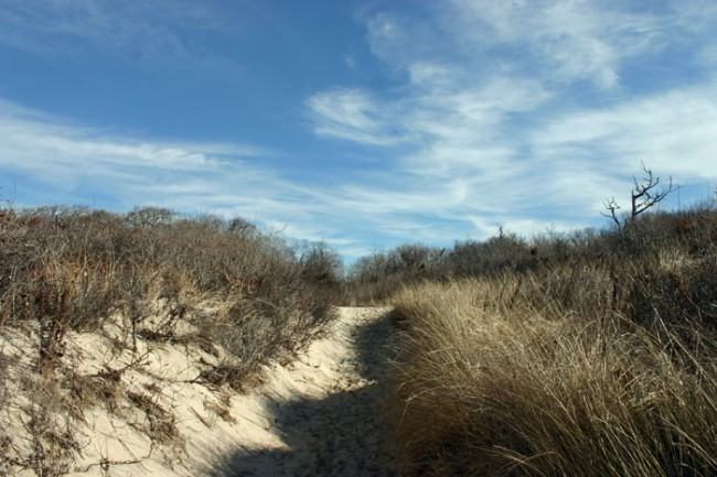 Pathway to Higbee Beach