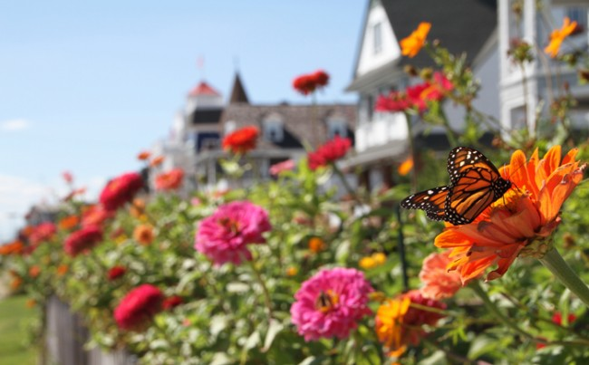 Full of color & a Monarch butterfly