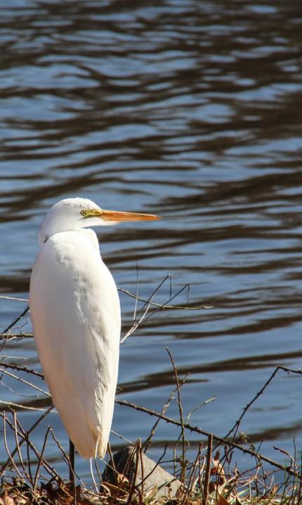 A friend at Lake Lily