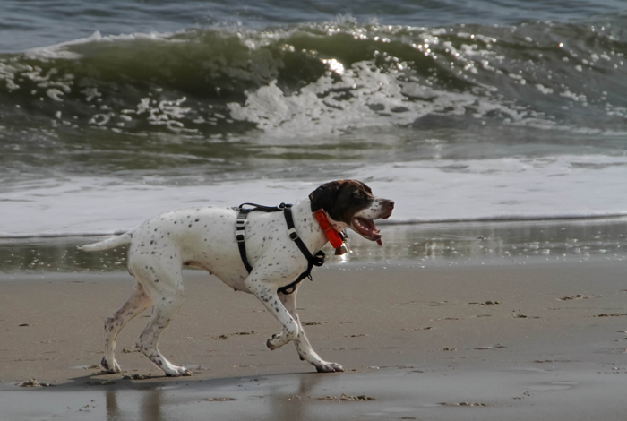 Zelda's first day on the beach