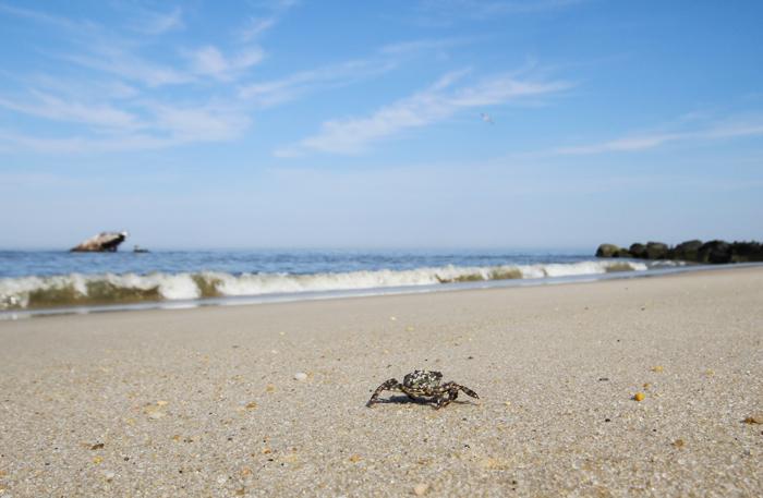 Happy Little Crab