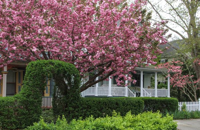 Bursting into Spring