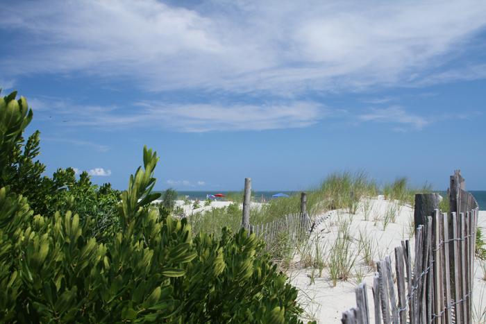 Along the dunes
