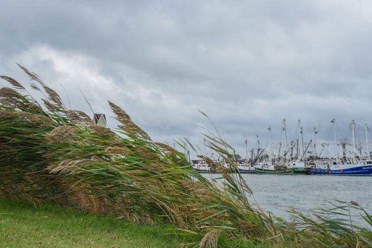 Harbor Wind