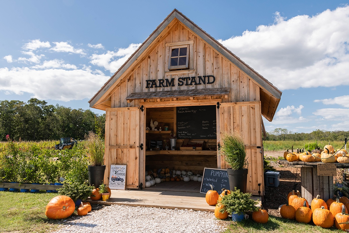 A farm stand barn with pumpkins with blue sky