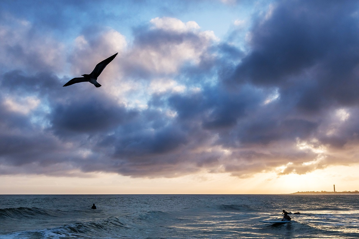 Bird flying by at sunset with clouds in the sky and surfers in the ocean