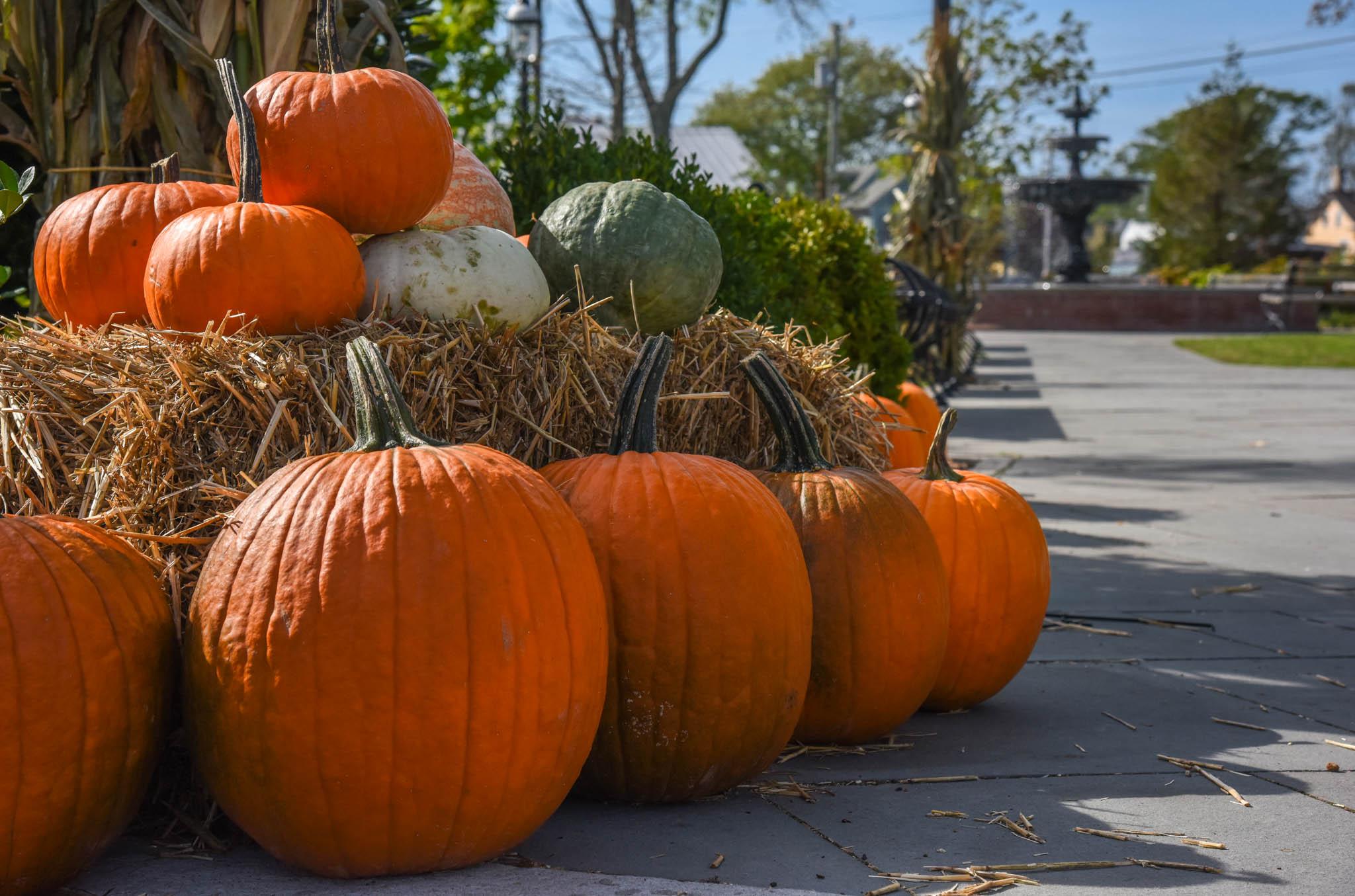 Pumpkins At Rotary Park