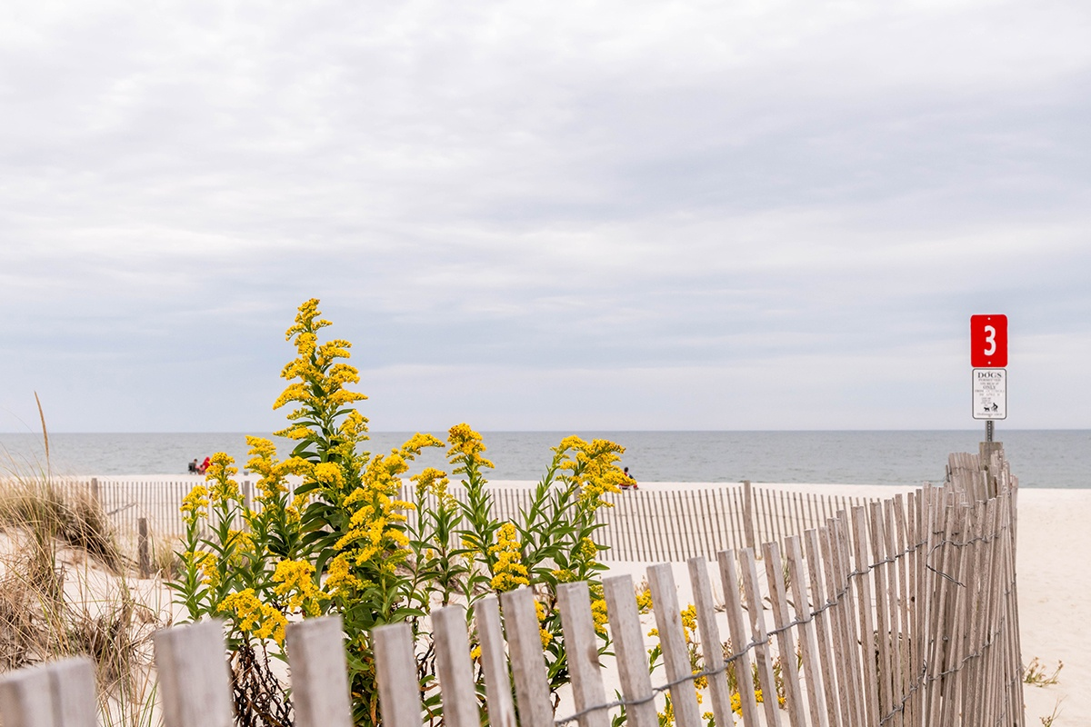 Yellow flowers in the dunes at the beach on a cloudy day