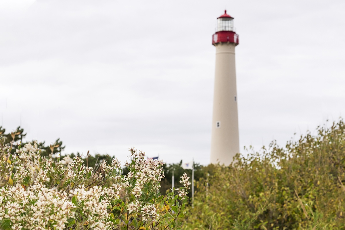 Cape May Lighthouse in the distance on a cloudy day with white flowers and green bushes in the foreground