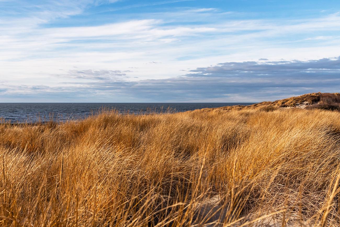 Golden beach dunes on a sunny day