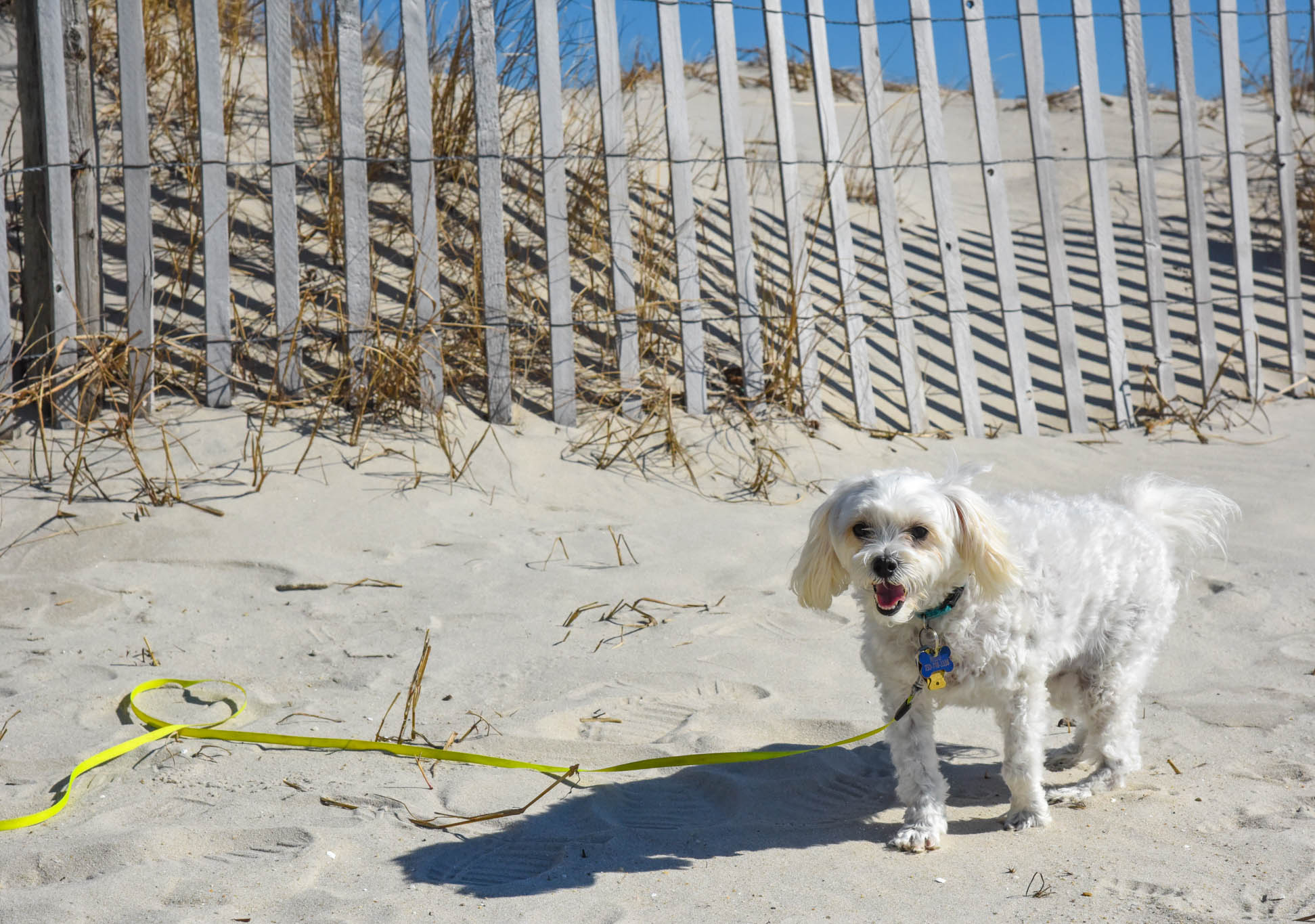 a dog on the beach his name is Milo