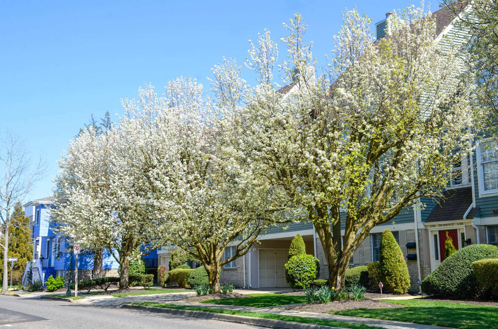 Trees are blossoming