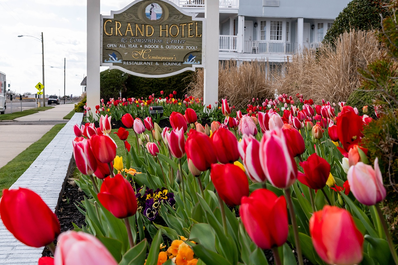 Colorful tulips at the Grand Hotel