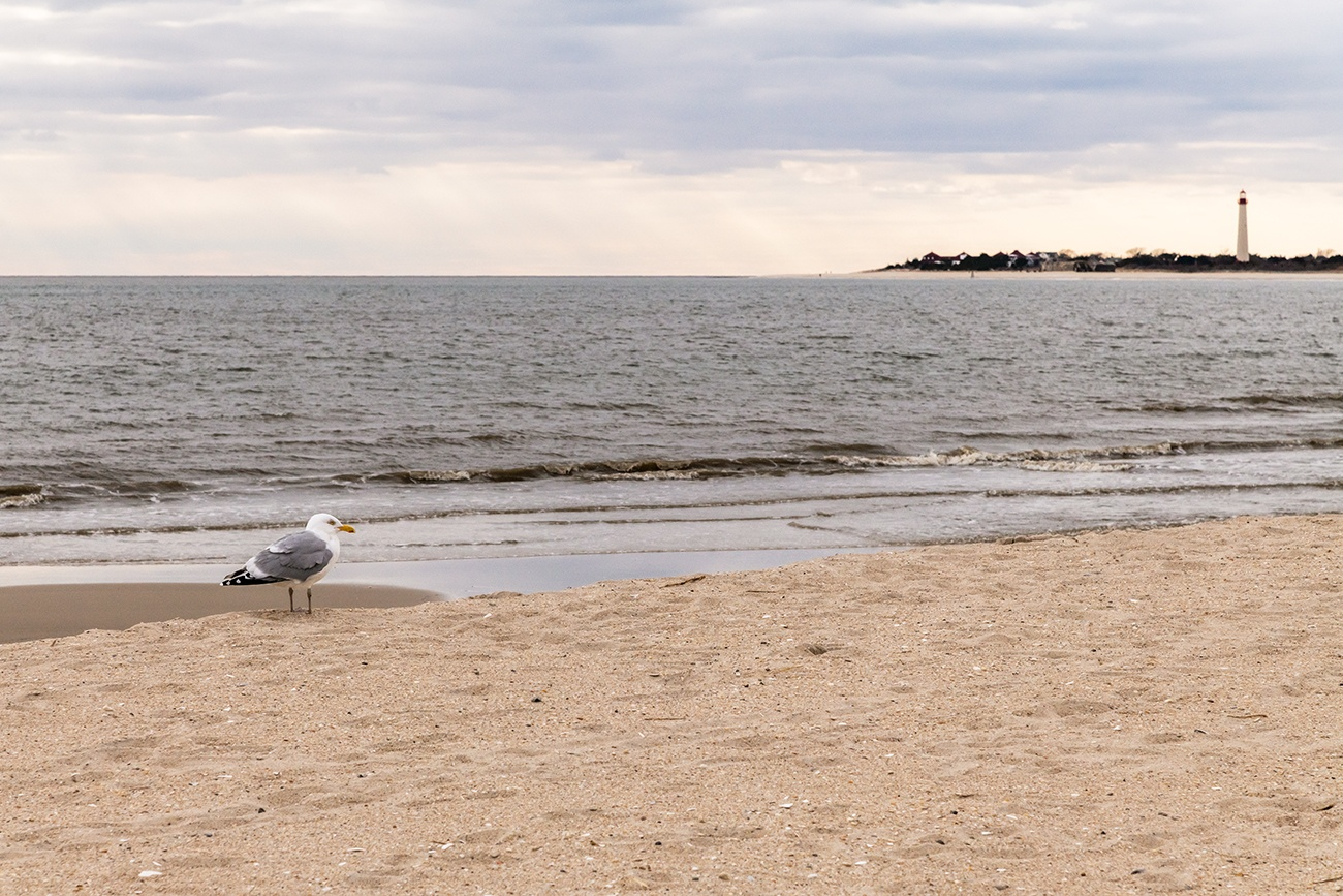A seagull on the beach on a cloudy day with the lighthouse in the distance