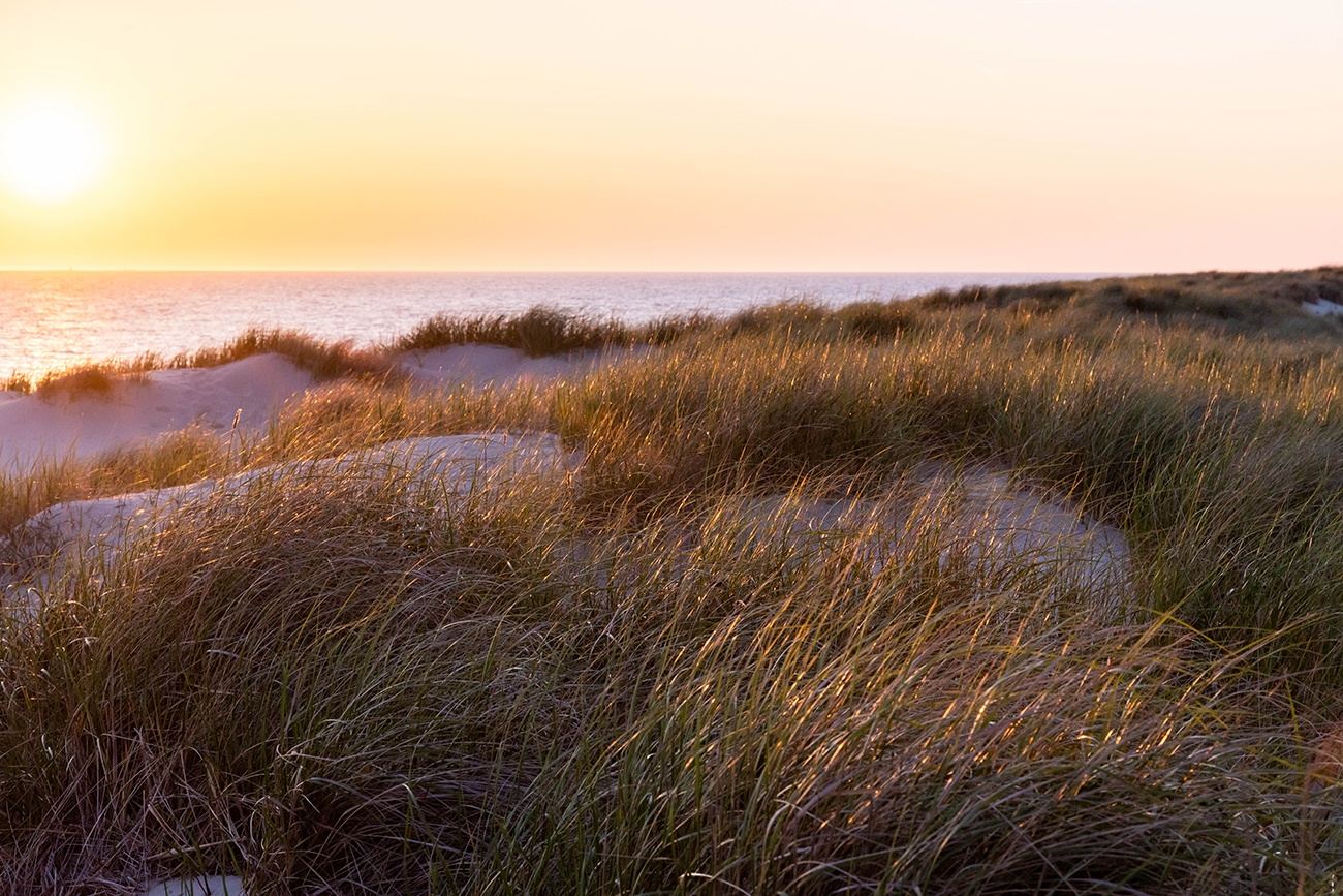 Sun setting in the distance, casting golden light on the sand dunes