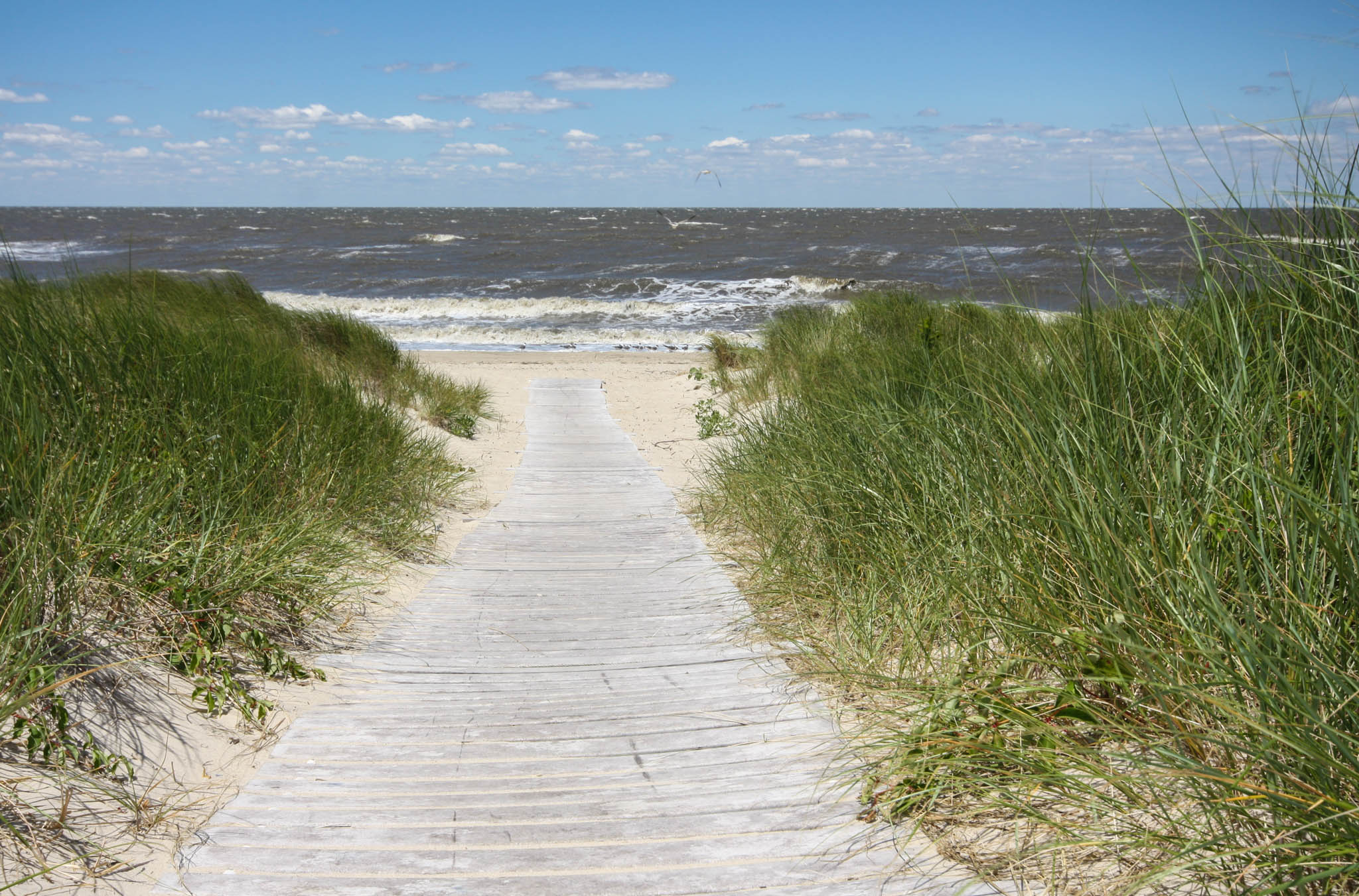 Path to the Delaware Bay