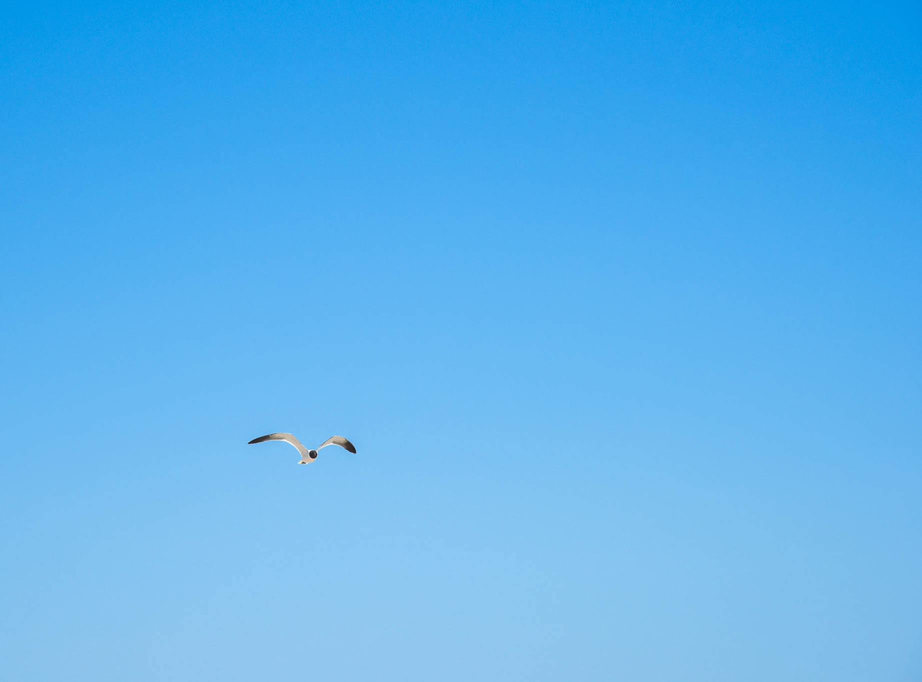 Looking up at a seagull