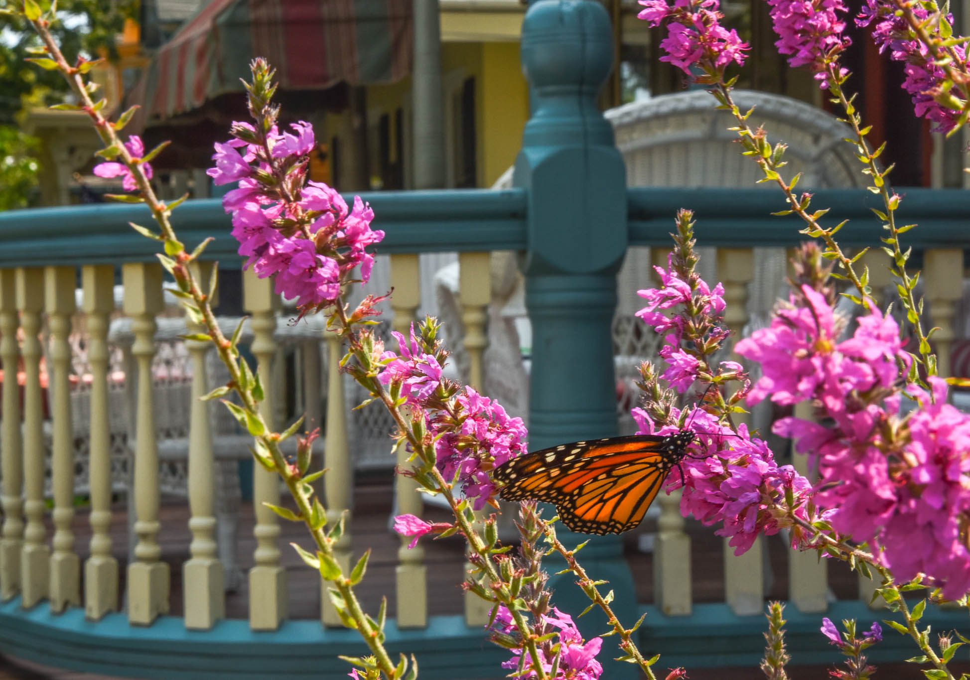 Chasing A Butterfly along Decatur St