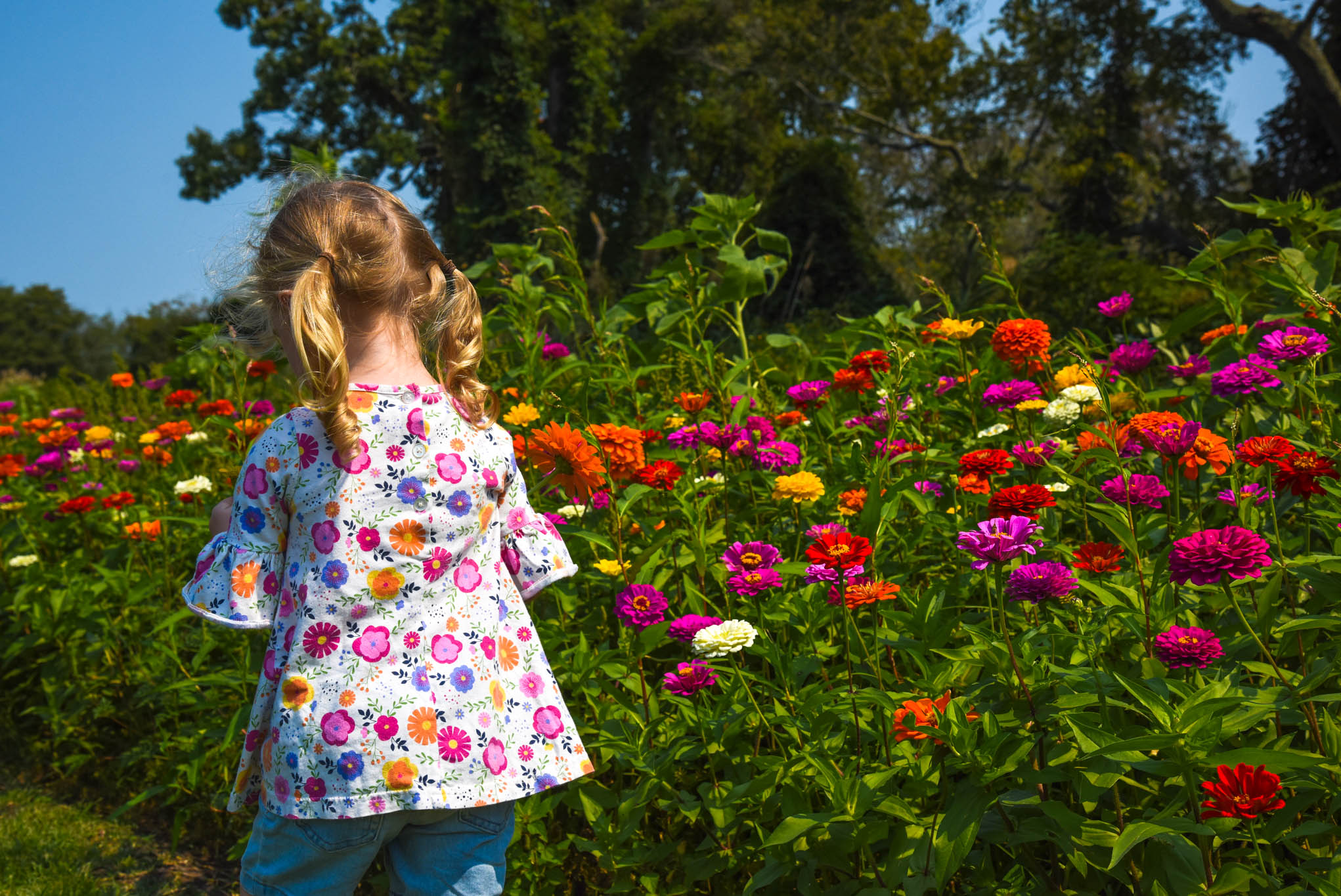 Little Girl picking flowers at Willow Creek Winery.