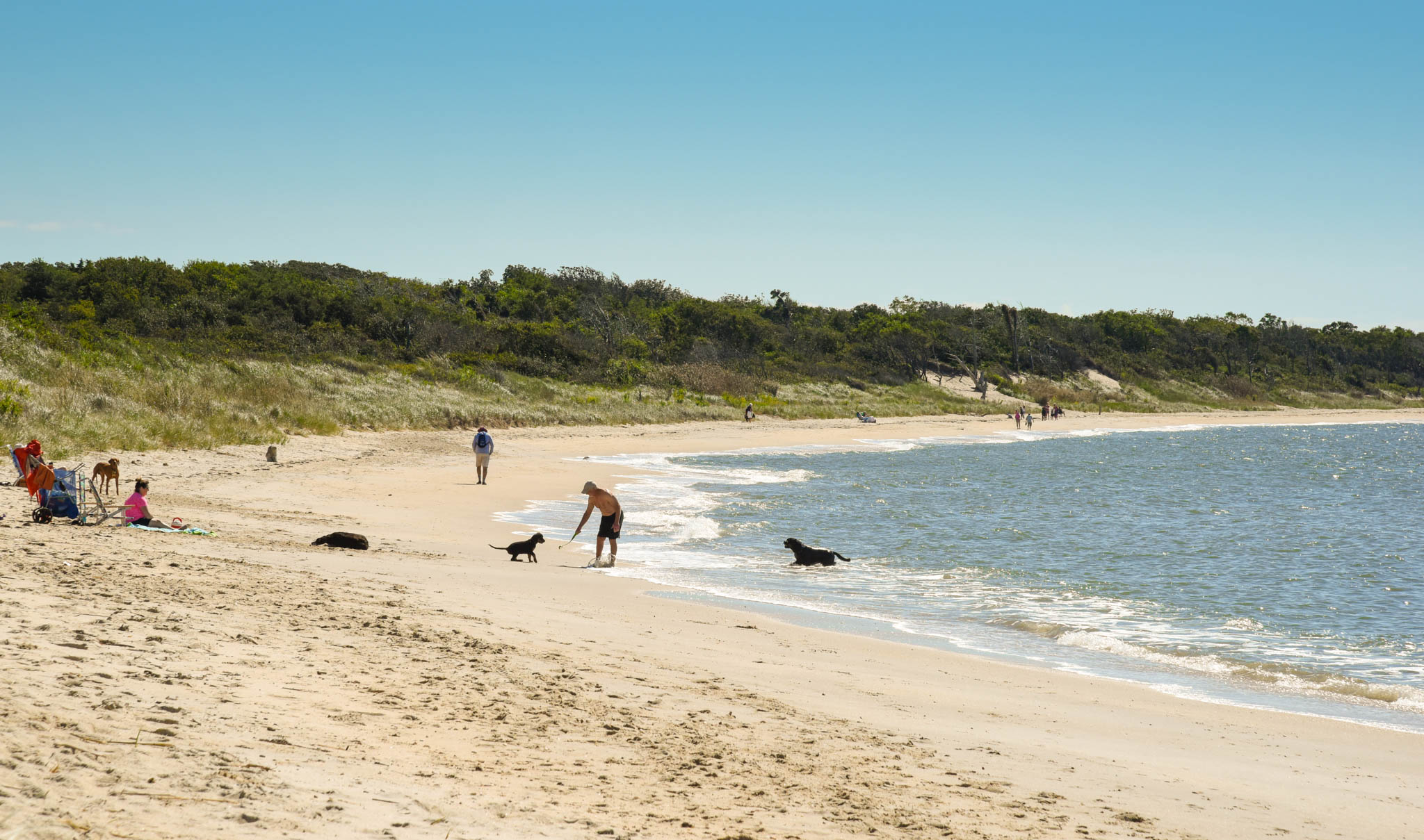 Dogs playing with their humans at Higbee Beach