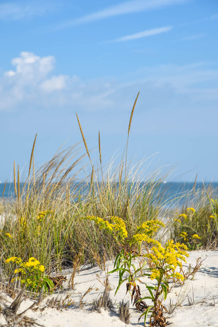 Sand dunes with a breeze of salty air blowing
