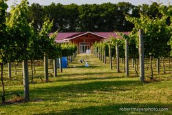 willowcreekwinery2